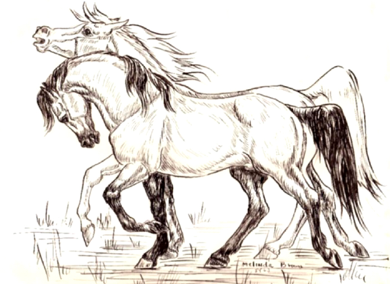 Native American Horse Drawings Sets of pairs of horses,