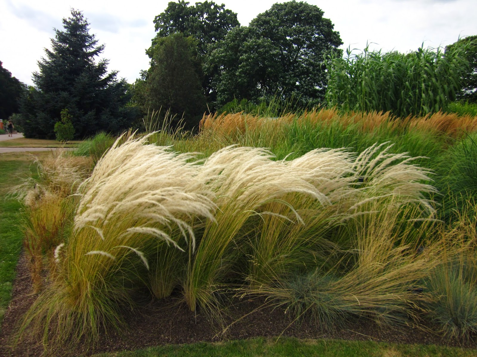 Plante On Plants Stipa Ichu The Other Hair Grass