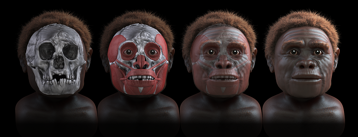 homo floresiensis the hobbit Homo floresiensis (man of flores) is the proposed name for a possible species  in the  to the ancient hobbits, who go by the scientific name homo floresiensis.