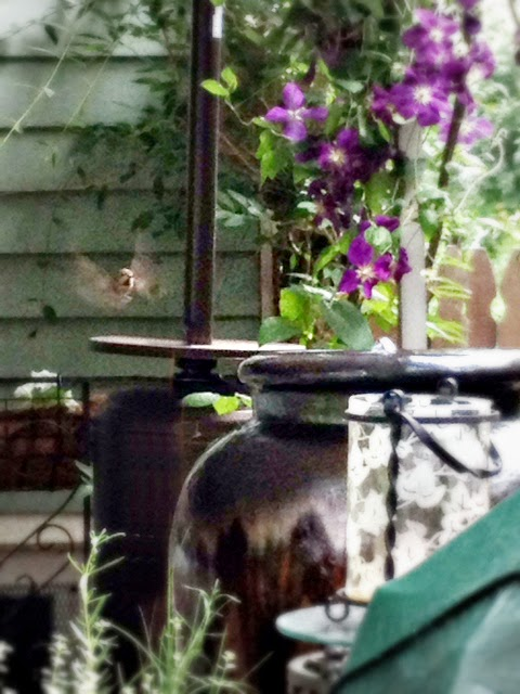 Captured In Flight - Hummingbird - Wordless Wednesday - Ann Again and again