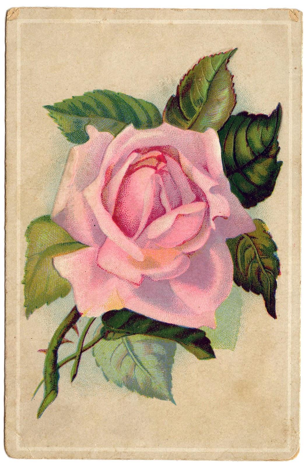 http://2.bp.blogspot.com/-NBmq0R0962I/UH4U4Nv4h9I/AAAAAAAAXII/8Wz5Tekq_3w/s1600/PinkRose-Vintage-GraphicsFairy.jpg