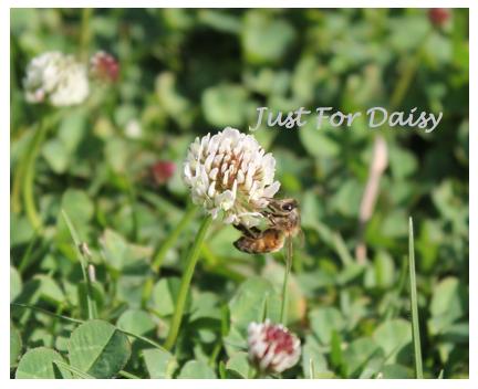 bee flower macro