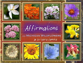 Affirmations and Michigan Wildflowers