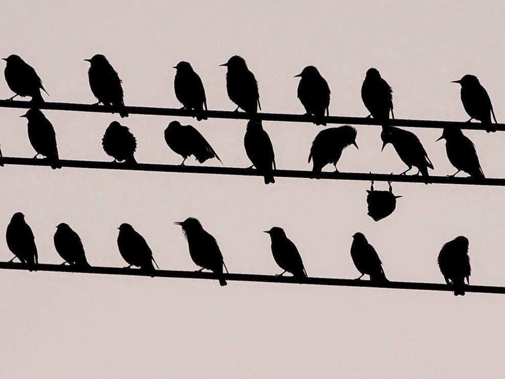 http://2.bp.blogspot.com/-NCT2bDkcVKk/VEDoof-lv3I/AAAAAAAAHF0/fIhdMbbdJ74/s1600/blackbirds.jpg
