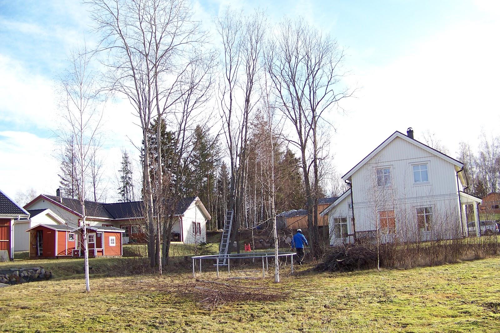 alexandras garten in schweden mein freund der baum ist tot baumf llen teil 2. Black Bedroom Furniture Sets. Home Design Ideas