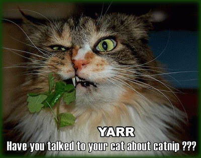 cat chewing on catnip