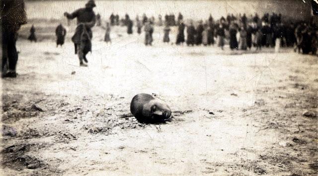 Et afhugget hovede, efter henrettelse med sværd