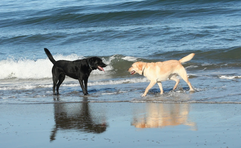 cabana and jordy standing in the water, facing each other in a tired and friendly way
