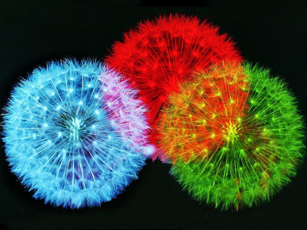 http://2.bp.blogspot.com/-NDRiCmIngss/T_Du30tDFeI/AAAAAAAAEJ4/YmZqsUMr-tY/s1600/color-fireworks.jpg
