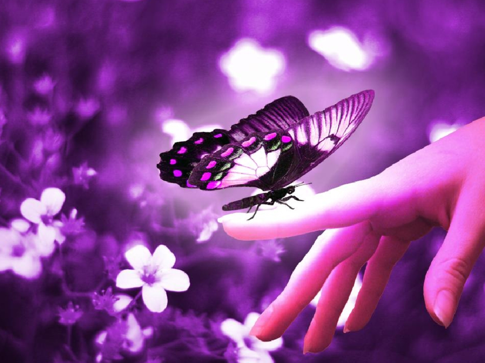 To Holley:  A Beautiful Butterfly!