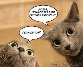 Um diálogo felino!