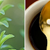 Στέβια το ακίνδυνο φυτό που αντικαθιστά τη ζάχαρη - Σε τι μας ωφελεί!!!