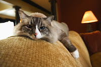 Evitar Que um Gato Urine Nos Móveis