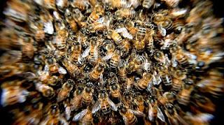 Gonfiore puntura d'ape