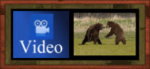 BEAR FIGHT Video: