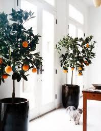 árvores em casa
