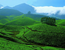 Kerala Tourism Munnar