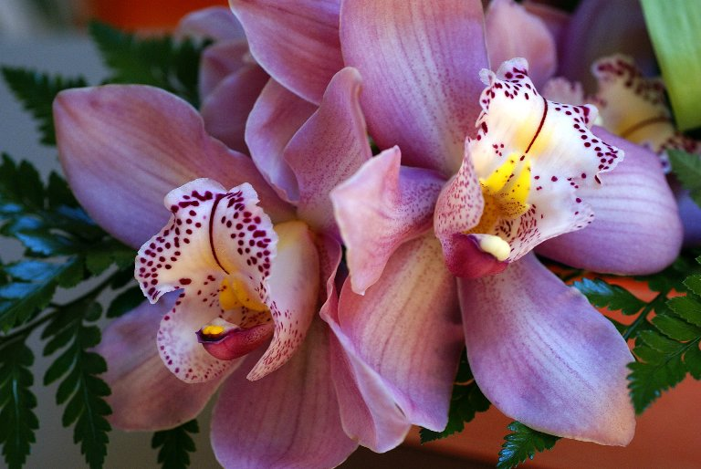 http://2.bp.blogspot.com/-NE_DDecAFZU/T_YWr3Br5KI/AAAAAAAAVfA/N5t_i7olcCs/s1600/beautiful-orchid.jpg
