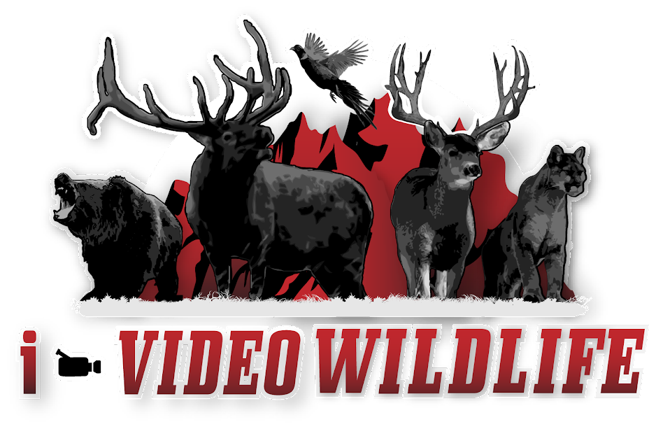 i-Video Wildlife