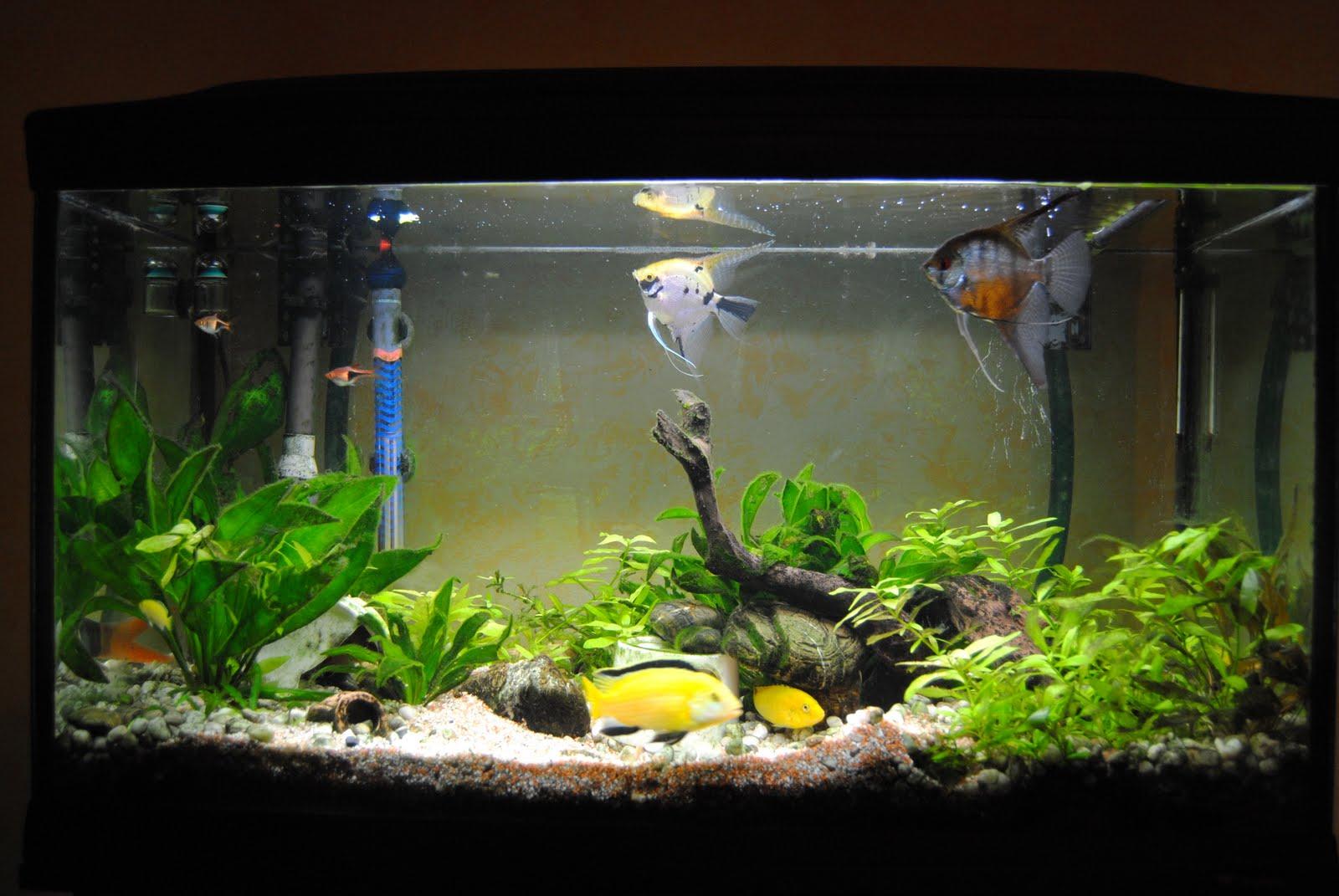 la vie de mon aquarium mon 120l au 1 avril 2011. Black Bedroom Furniture Sets. Home Design Ideas