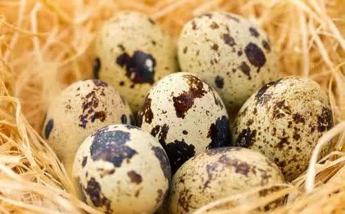 Tips Awet Muda Dengan Telur Puyuh