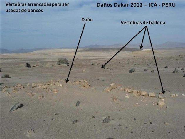 EL DAKAR VIOLA LEYES CHILE