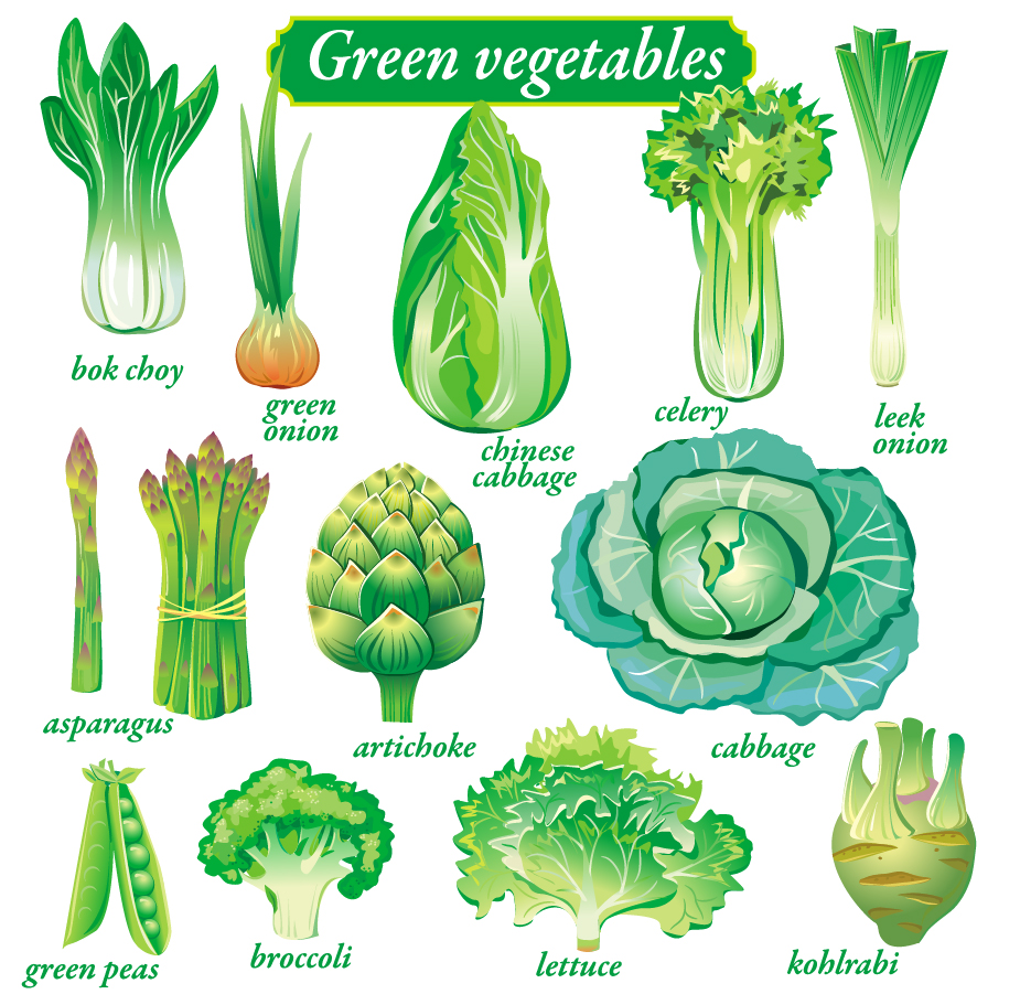 野菜のクリップアート vegetables vector イラスト素材