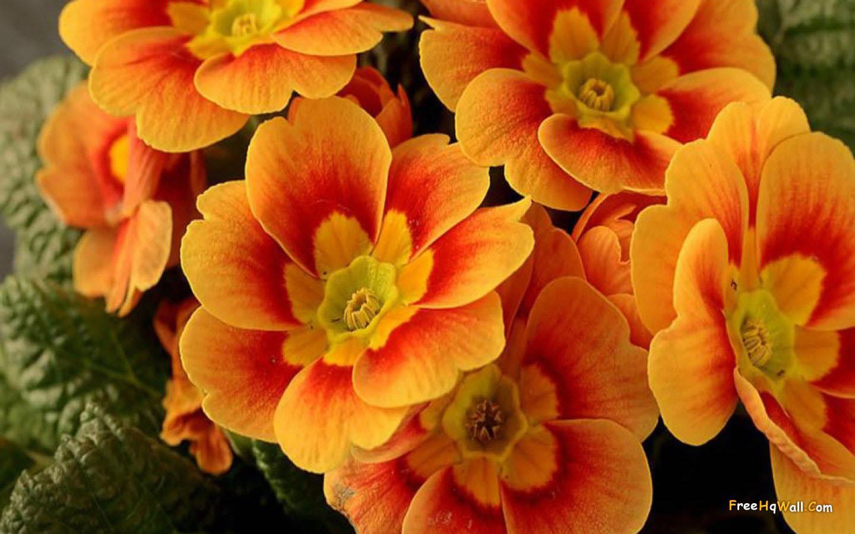 Pam dawber beautiful flower wallpapers for your desktop izmirmasajfo
