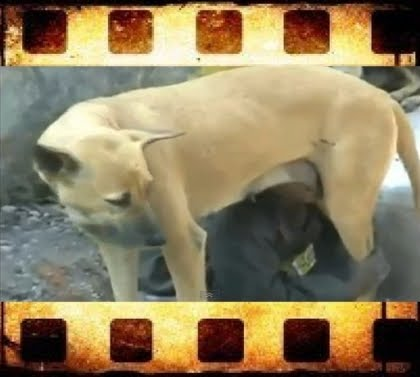 página web perra chorreo de leche en Baracaldo