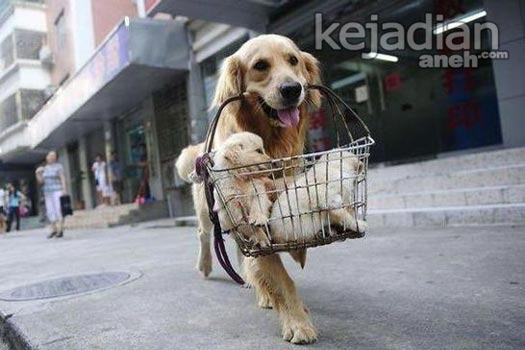 13 Kisah Kesetiaan Anjing yang Dijamin Bikin Nangis