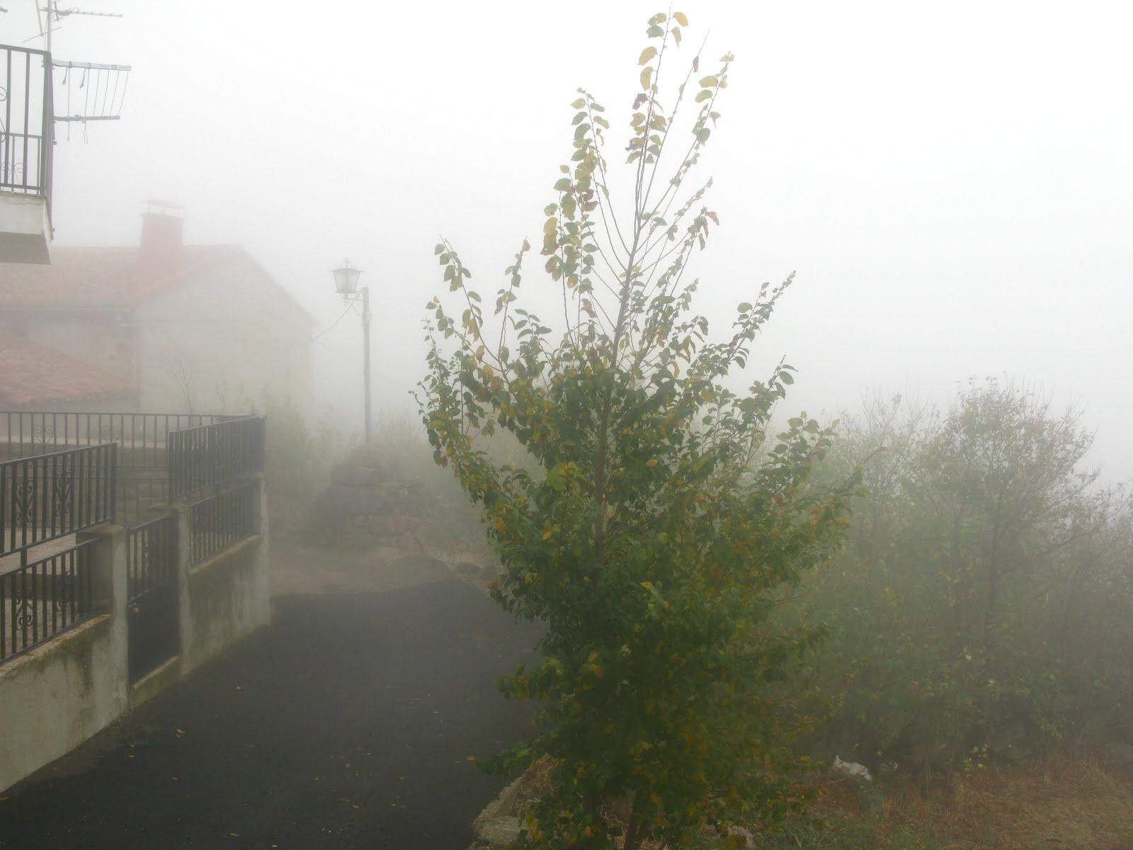 Niebla en el pueblo