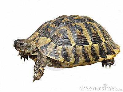 Mundo animal tudo sobre tartarugas - Pagine di colorazione tartaruga ...