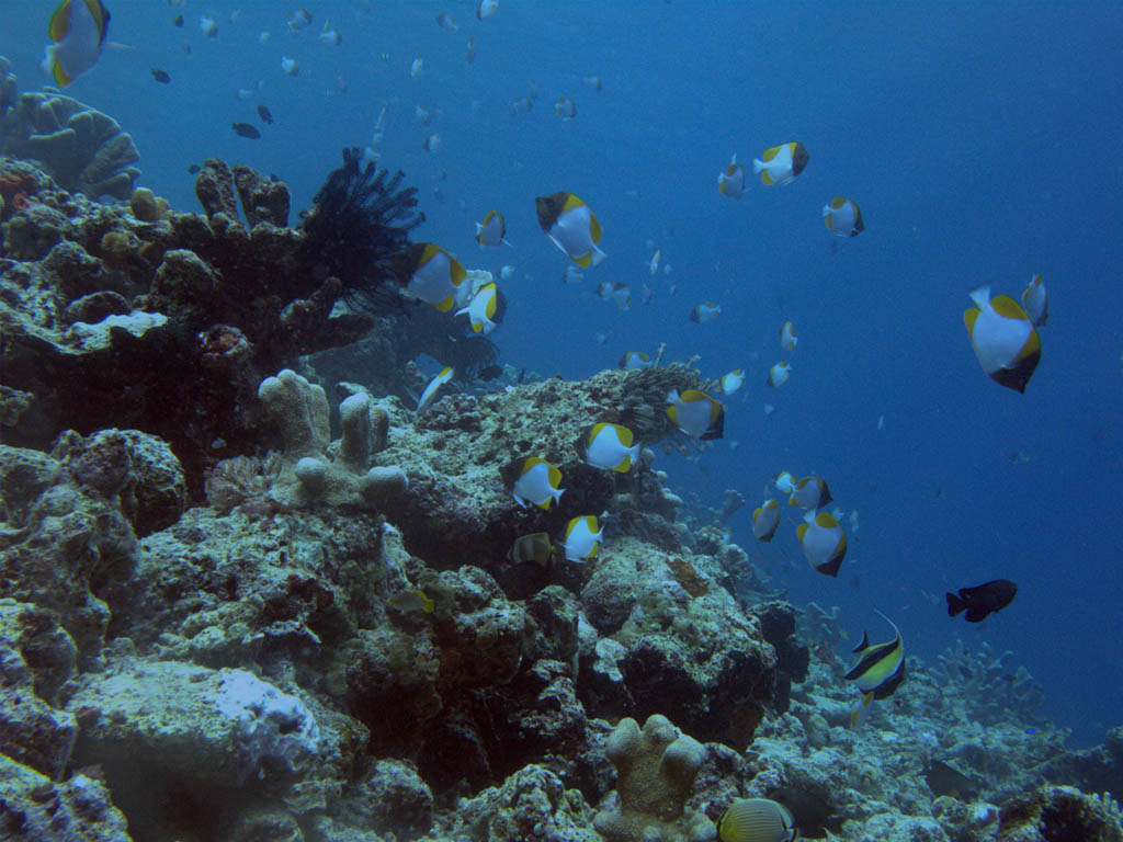 http://2.bp.blogspot.com/-NGcqlUajEh4/Tbk1q7Gc1VI/AAAAAAAAAGs/8VuBeRfGeVc/s1600/bunaken-diving-wallpaper-01-1024.jpg
