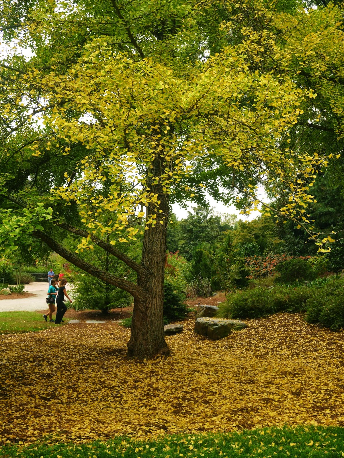 gardens@duke: Fall Foliage and Flowers