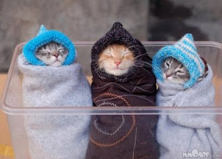 Foto Gambar Gambar Kucing Lucu