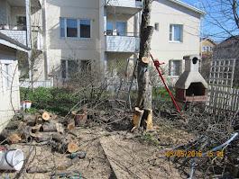 Omenapuiden ymv puiden leikkaukset palastelut käteisellä kotitalousvähennyskuitti sähköpostiisi