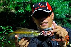 泰国北碧金吉罗纪录鱼