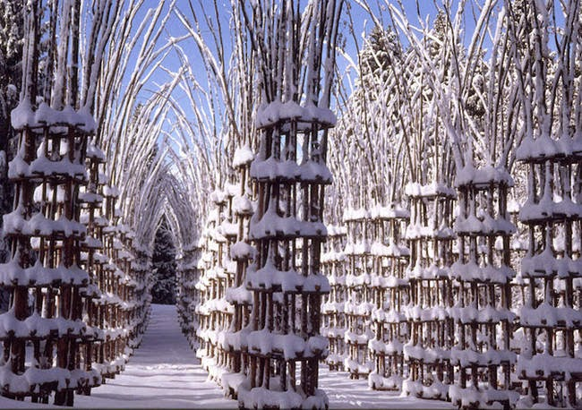 Eighty hornbeam saplings flower and fade with the seasons inside the columns. - A Gorgeous Outdoor Cathedral Made Of Live Trees Grows In Northern Italy