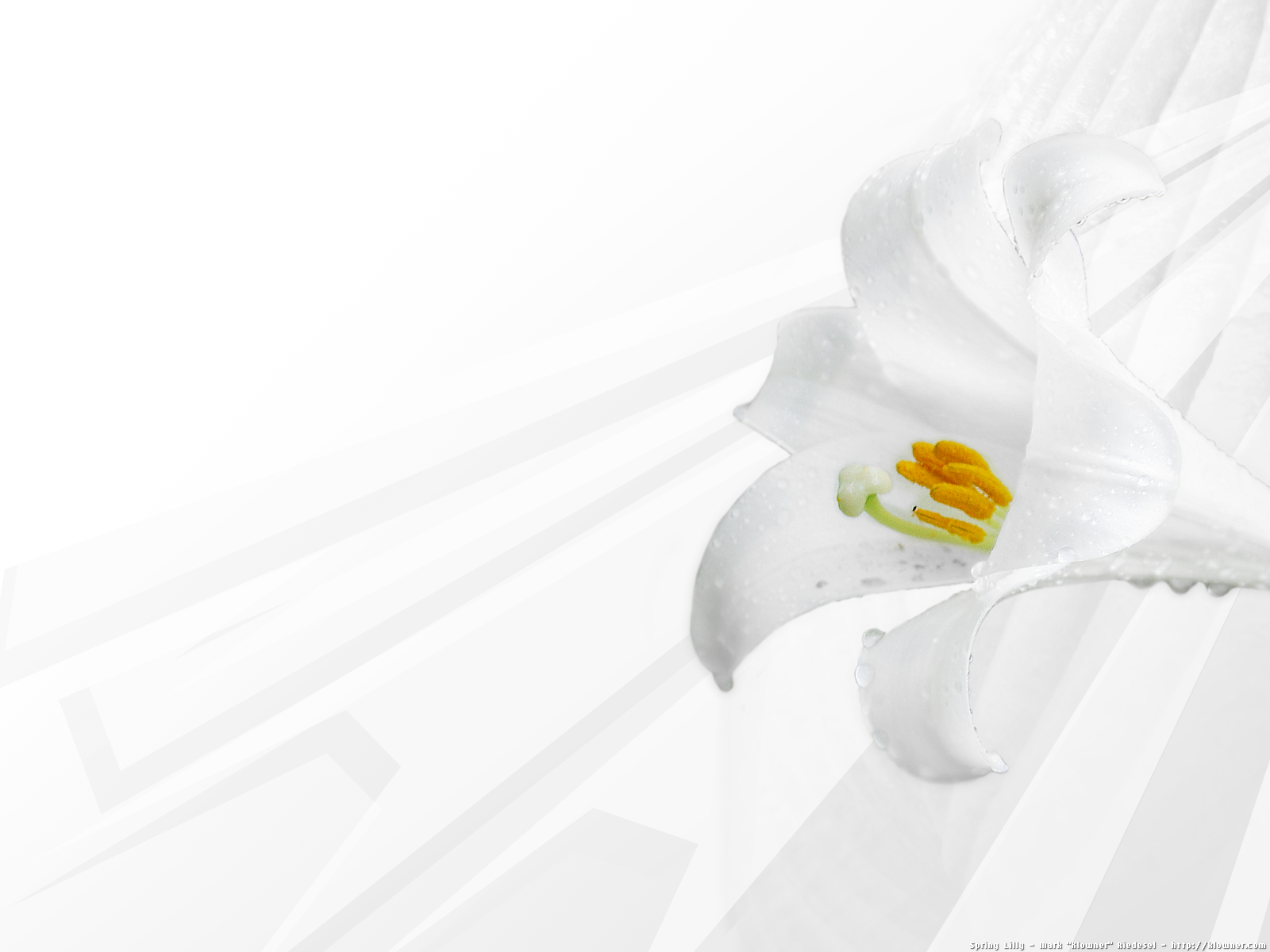 mariacandelaria: spring clean wallpaper