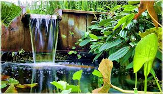 bassin de jardin et moustiques