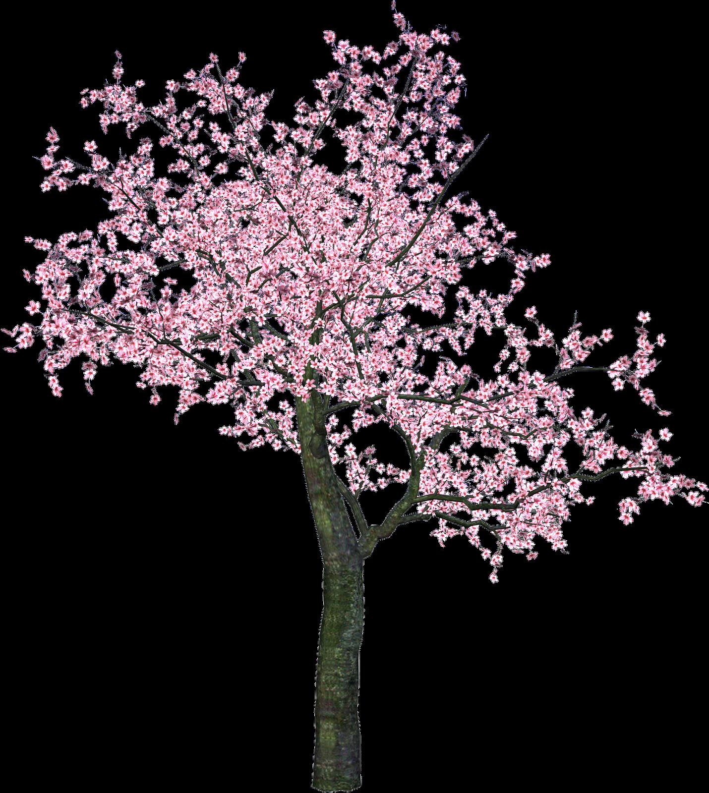 Gifs y fondos pazenlatormenta flores chinas - Rosas chinas ...