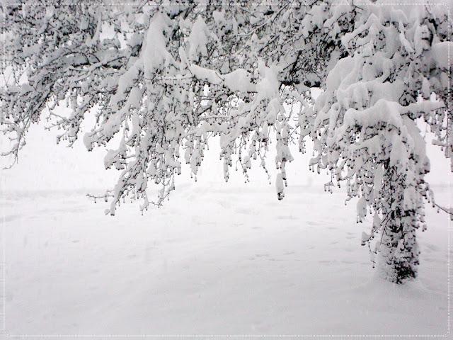 stablo u snijegu