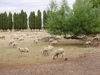 Sheep on the Via Appia