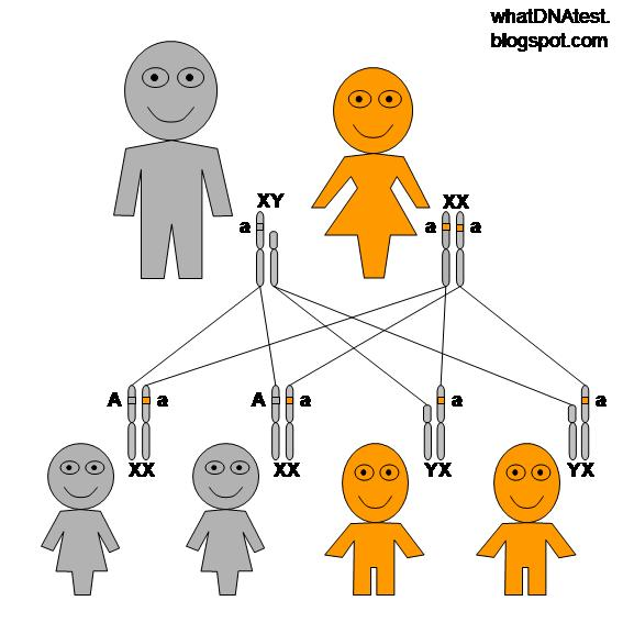 Figure 1 x linked recessive genetic inheritance pattern when the