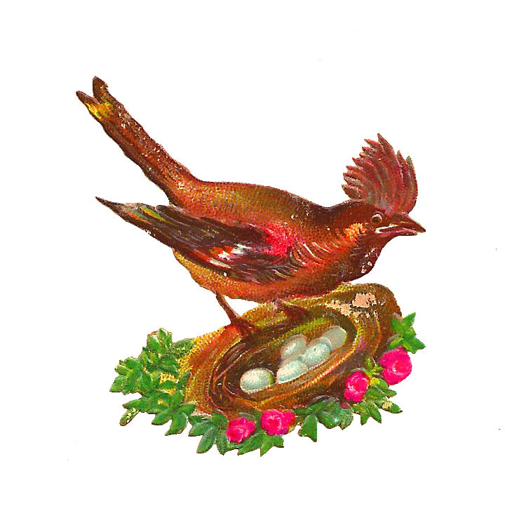 Bird nest clip art - photo#27