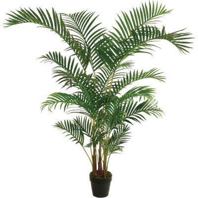 Know what large indoor plants to buy so that your pets benefit as ...