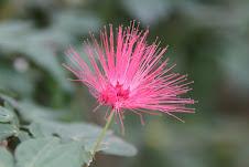 Flower starr-iness.