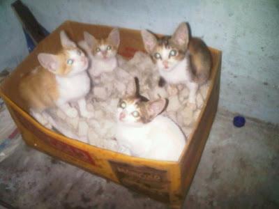 Biasanya Selera Makan Kucing Yang Masih Terkena Cacing