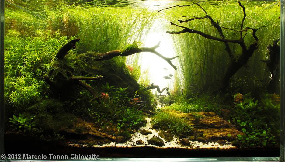 Belog sape ni aquascaping planted aquarium hang nak tengok ikan ka pokok hobi baru aku - Gambar aquascape ...