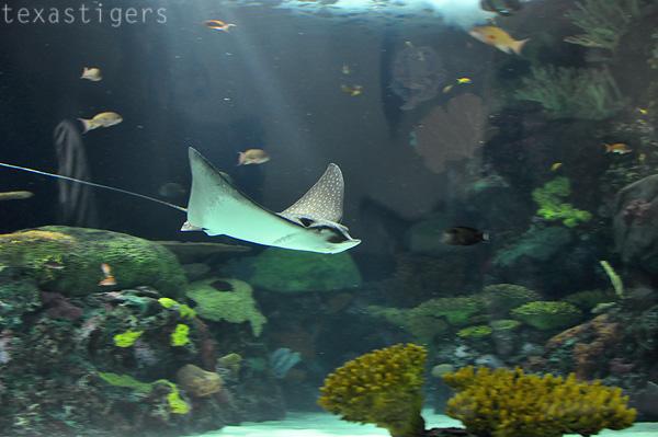 Texas Tigers Virginia Beach Aquarium
